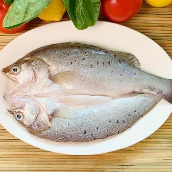 350-1000克 開背白蕉海鱸 咸水鱸魚肉質鮮嫩緊致Q彈