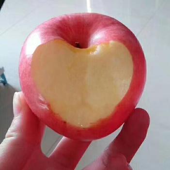 果農自家種植正宗煙臺棲霞蘋果,脆甜,口感好,歡迎品嘗