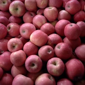 紅富士蘋果 庫里紅富士