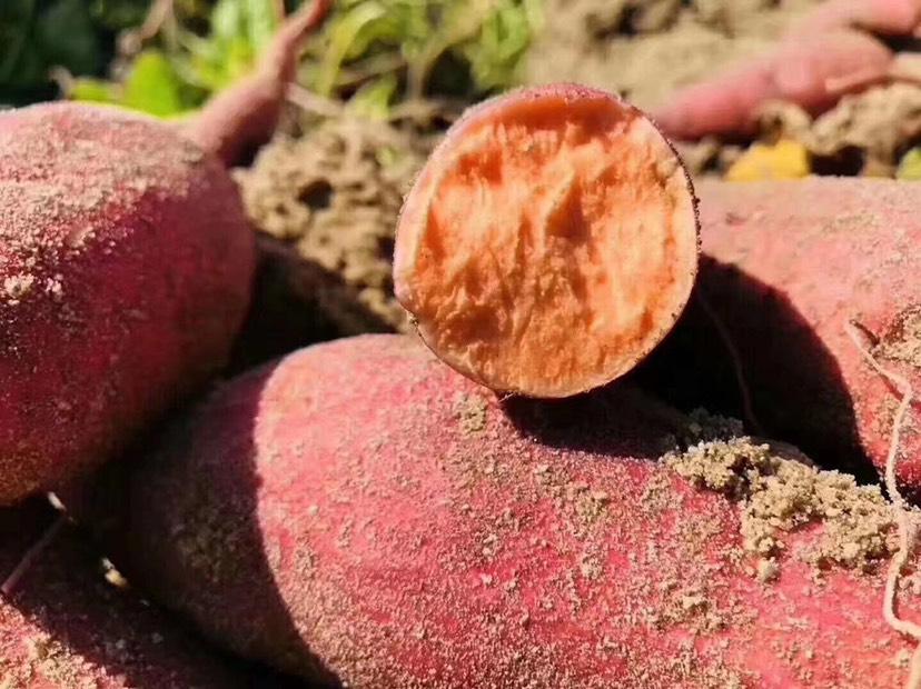 [红心红薯批发]红心红薯  六鳌红薯沙地红蜜薯 红心糖心小红薯地瓜西瓜红价格1.3元/斤