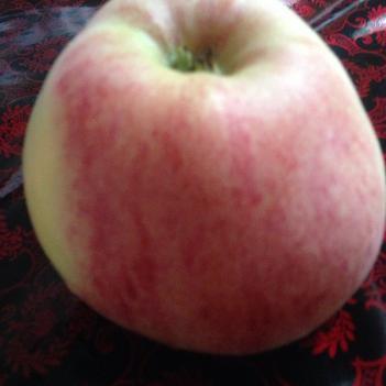 莫里斯蘋果