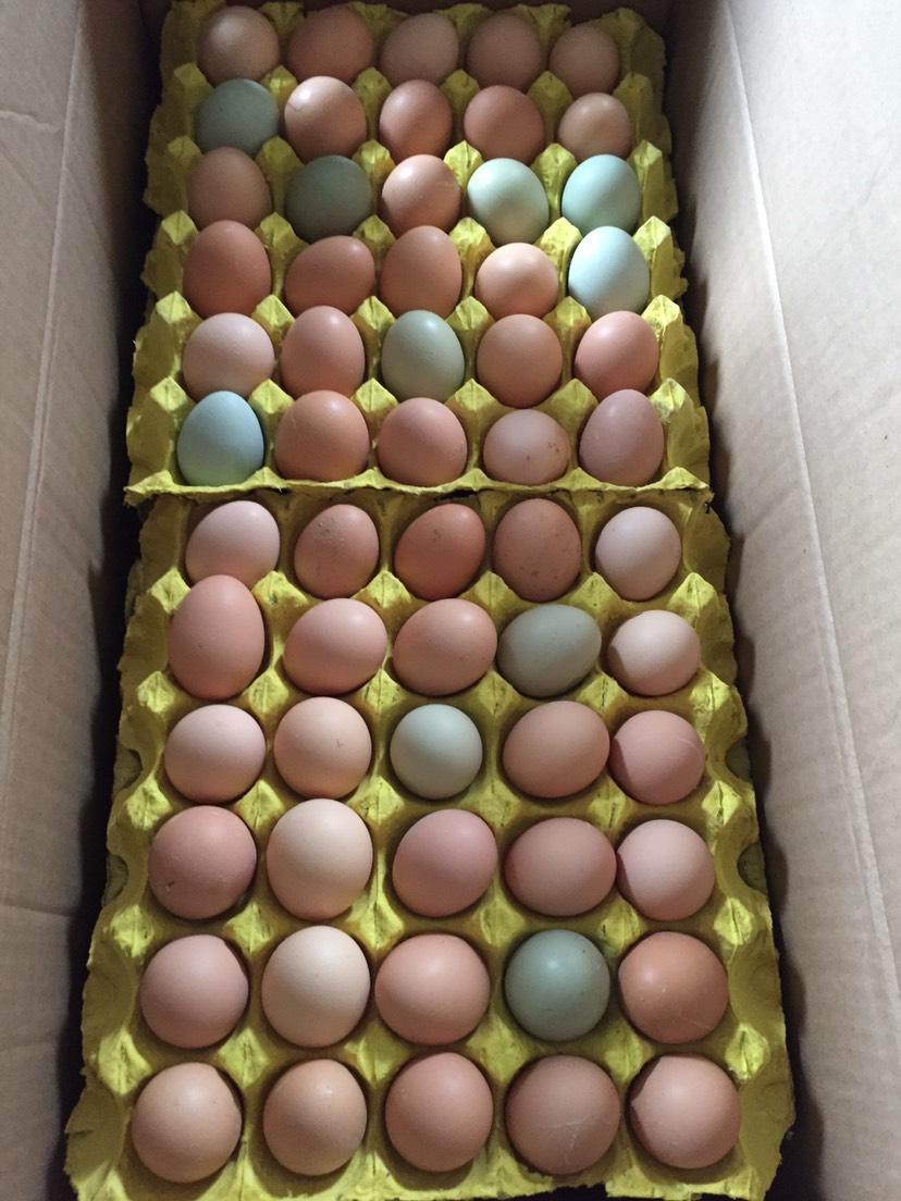 綠殼雞蛋 大碼雙色綠殼蛋