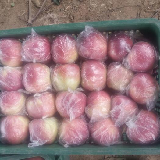 河北省衡水市饒陽縣莫里斯蘋果 80mm以上 表光 膜袋