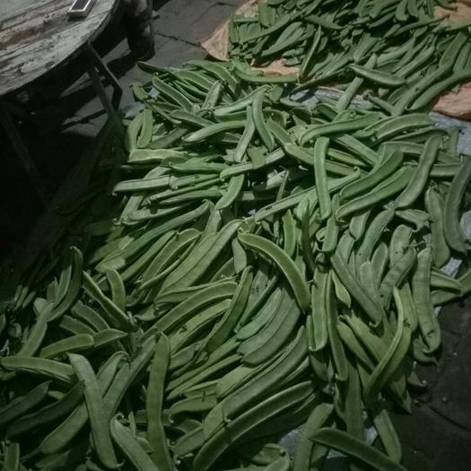 广西壮族自治区桂林市灵川县蔓生刀豆 15-20cm
