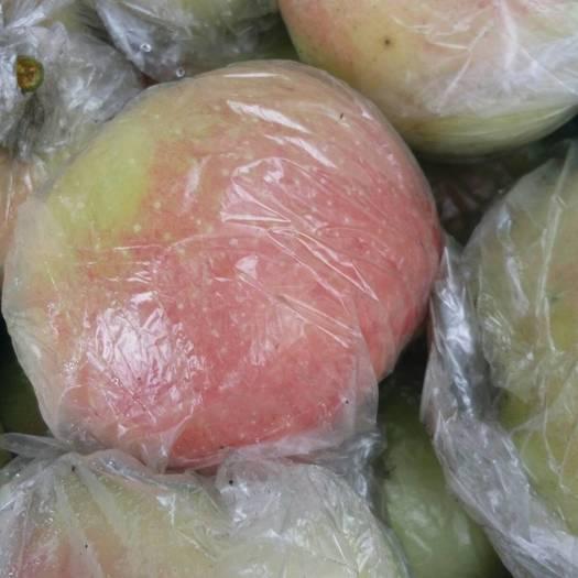 山東省臨沂市沂水縣美八蘋果 75mm以上 表光 膜袋