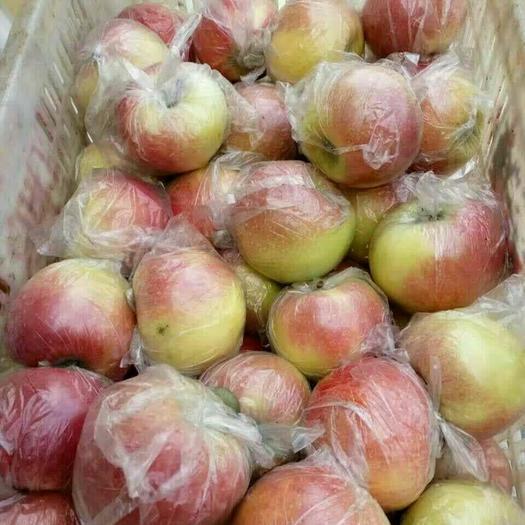 山東省日照市莒縣美八蘋果 75mm以上 全紅 膜袋