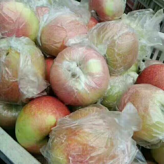 山東省日照市莒縣美八蘋果