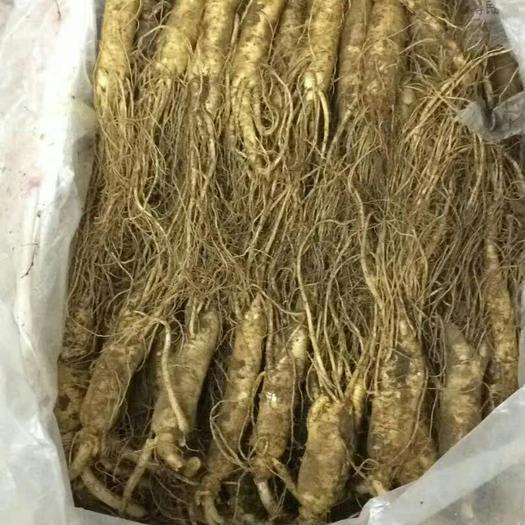 吉林省通化市通化县 长白山鲜人参,一斤20颗左右