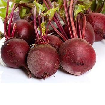 紅甜菜 15~20cm