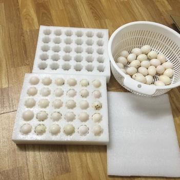 白鸽蛋 散装 食用