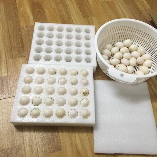 广西壮族自治区玉林市陆川县白鸽蛋 散装 食用