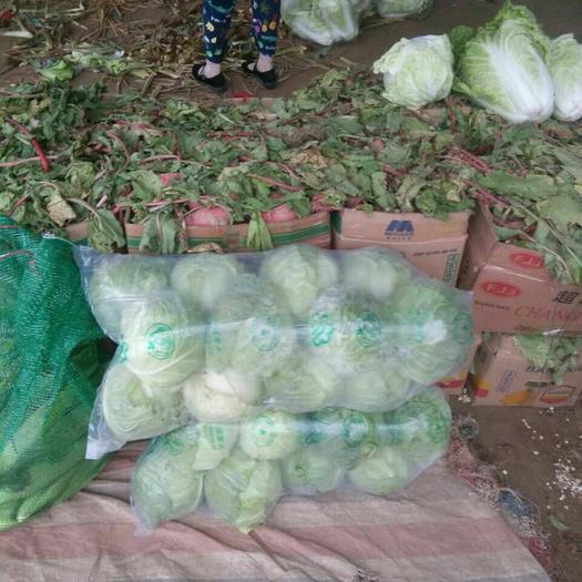 江蘇省徐州市沛縣萊陽45白菜 3~6斤 凈菜