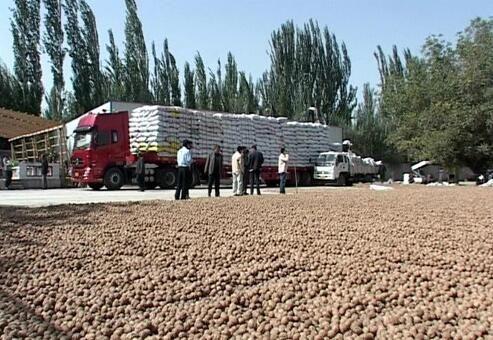 薄皮核桃 果肉飽滿2019年新貨(規格30-38)產地批發樣品十斤起發