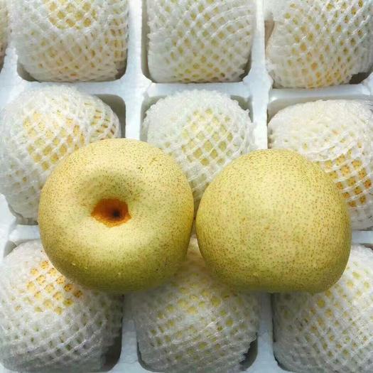 安徽省宿州市砀山县 安徽砀山酥梨,产自百年老梨树,产地直销,供应各大超市,批发商