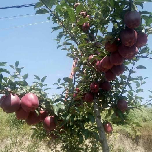 甘肅省平涼市莊浪縣首紅蘋果