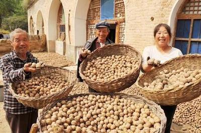 山西省忻州市原平市薄皮核桃 果肉飽滿量大優惠