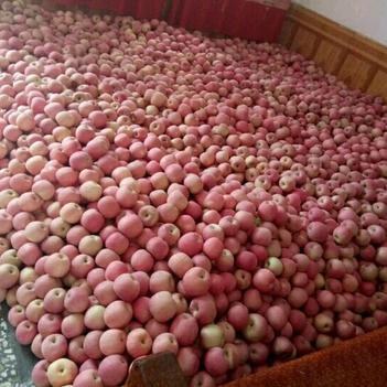 艷紅蜜蘋果
