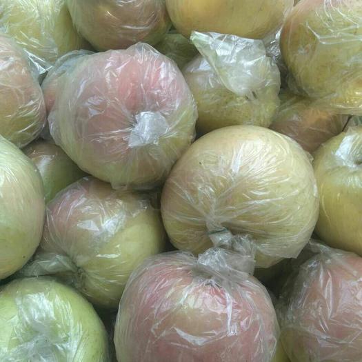 山東省聊城市莘縣紅富士蘋果 75mm以上 條紅 膜袋