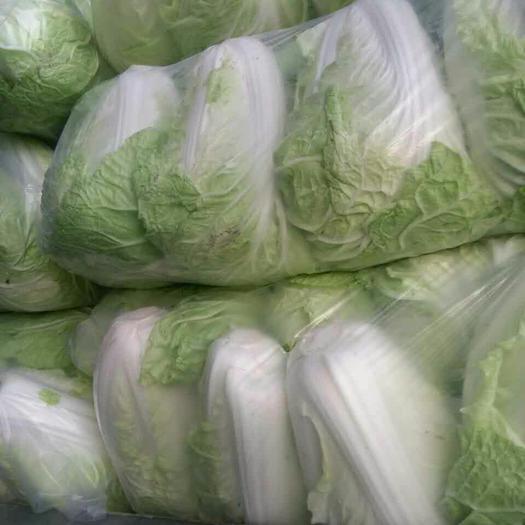 江蘇省徐州市沛縣萊陽45白菜 2~3斤 凈菜