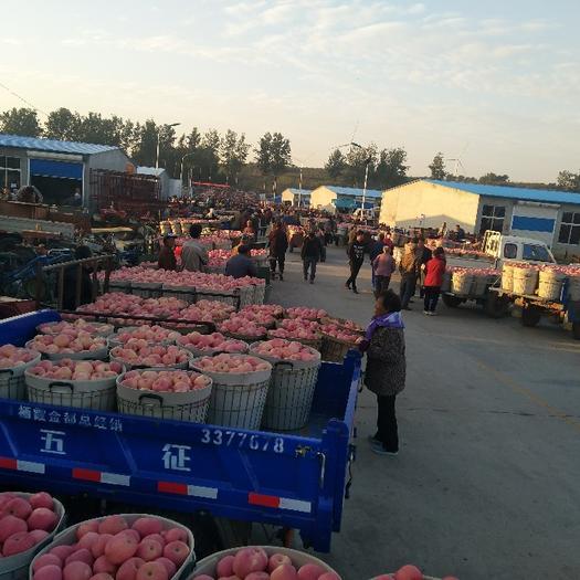 湖北省黃岡市黃梅縣紅富士蘋果