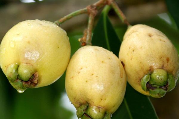 2020年种植什么水果能致富?六大新兴水果种植项目赶紧了解!
