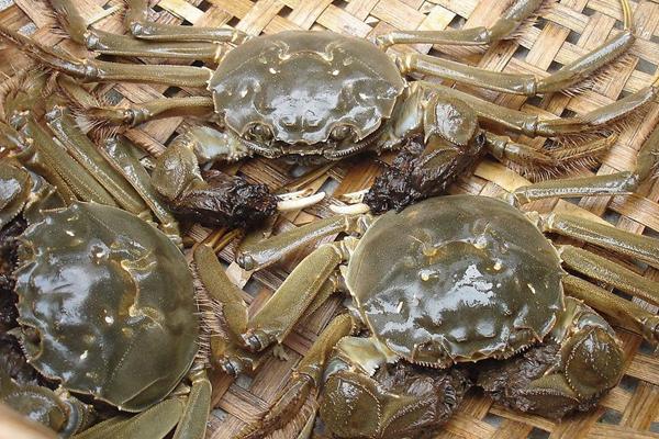 淡水蟹和海水蟹的區別