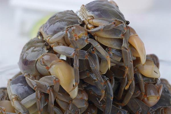白玉蟹產地在哪?白玉蟹和毛蟹有何區別?