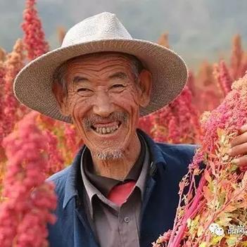 三色藜麥 黑白紅藜麥米 自家種植一件代發