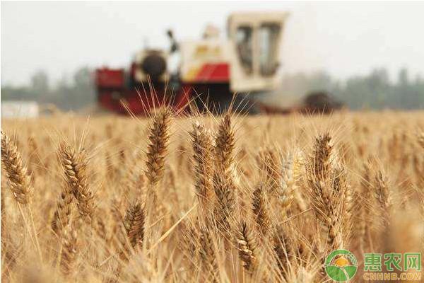 亚博电竞官网_小麦价格多少钱一斤?7月5日全国小麦价格
