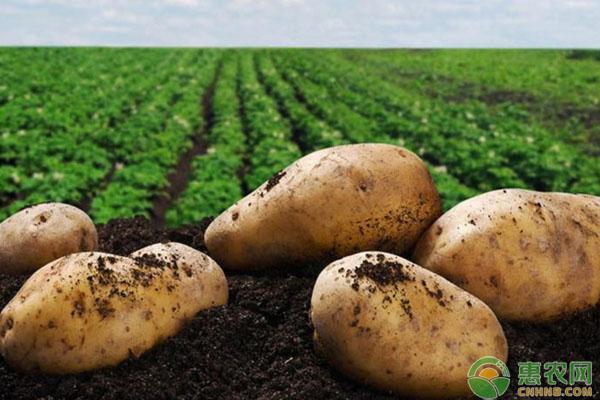 亚博电竞官网_今日土豆多少钱一斤?7月5日土豆主产区收
