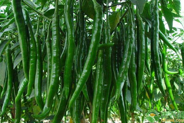 壁纸 风景 果实 蔬菜 植物 种子 桌面 600_400