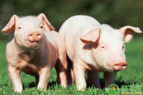 今日生猪收购价格多少钱一斤?7月7日全国生猪价格最新报价
