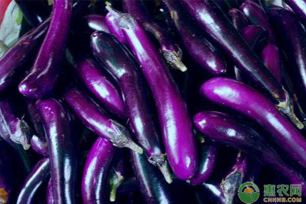 茄子收购行情如何?7月11日茄子主产区收购行情