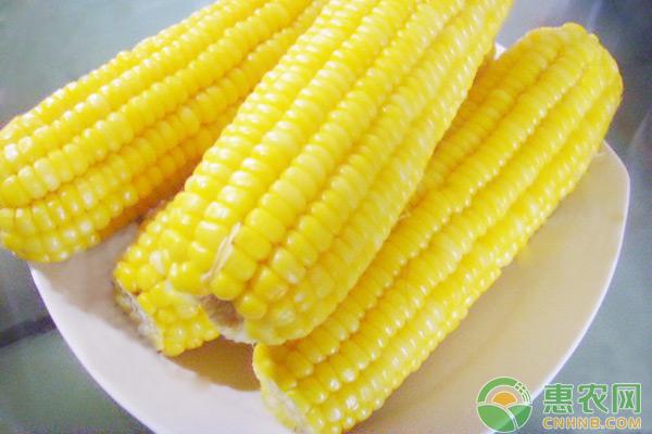 玉米日评:交投清淡 粮价基本稳定