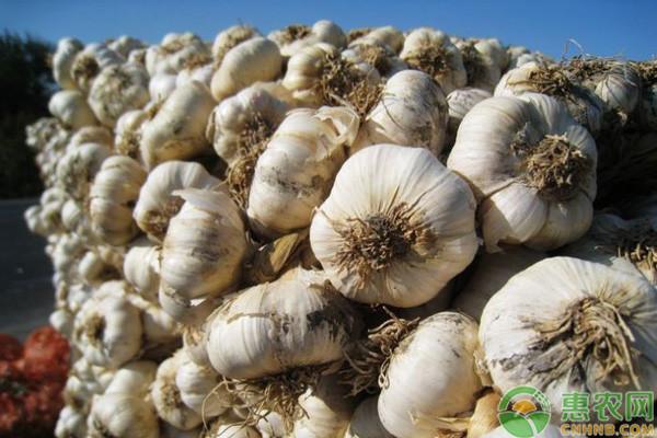 今日大蒜收购价格多少钱一斤?7月19日各地大蒜价格最新报价