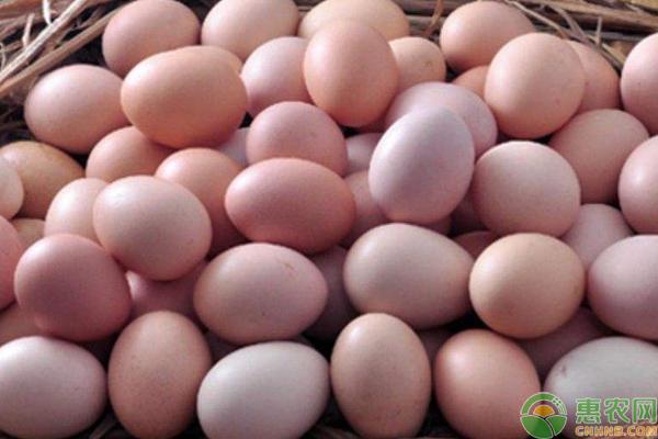 鸡蛋价格再次上涨;目前多少钱一斤?