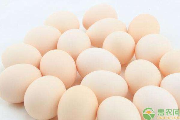 7月27日鸡蛋价格行情汇总