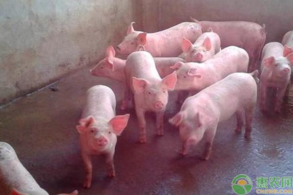 8月20日全国仔猪价格行情汇总