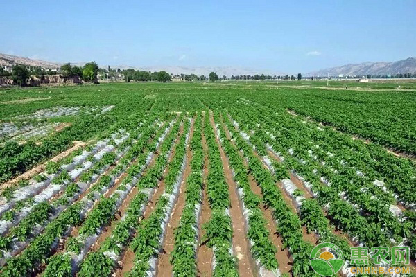 他帶領村民創辦專業合作社,提高農產品質量喜待豐收