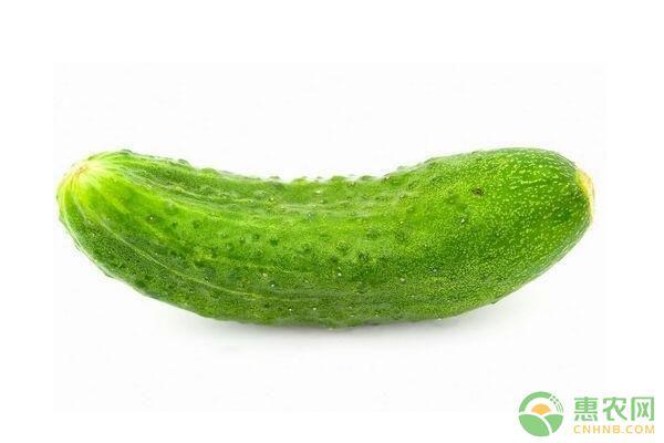 8月30日黄瓜主产区市场收购价格行情