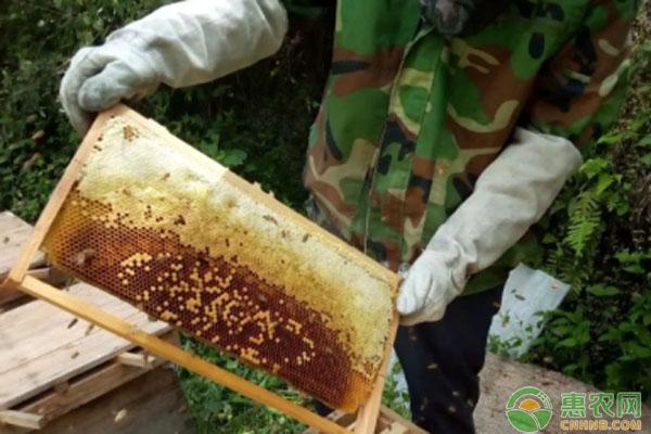 蜜蜂养殖致富