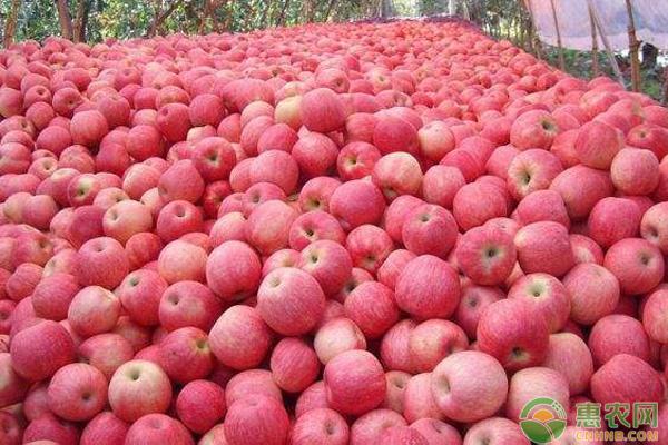 苹果收购价格