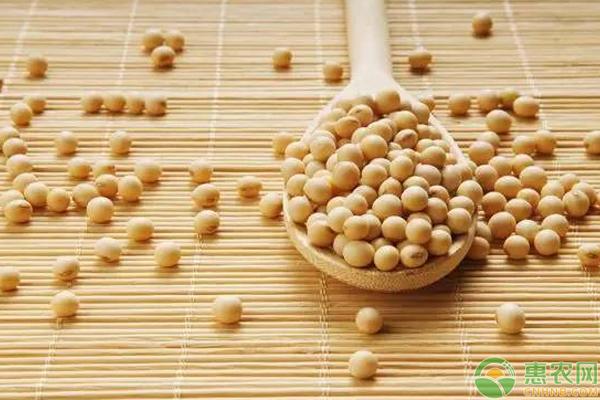 大豆价格上涨有望?目前多少钱一斤?2019年大豆价格预测