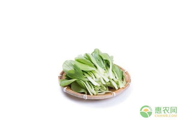 鸡毛菜有哪些营养价值?鸡毛菜的功效与作用