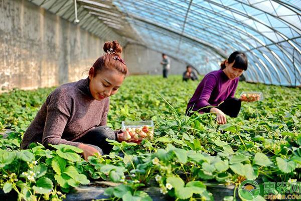 生态农业补贴