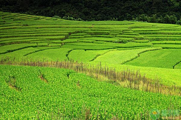蛙稻田种养技术要点