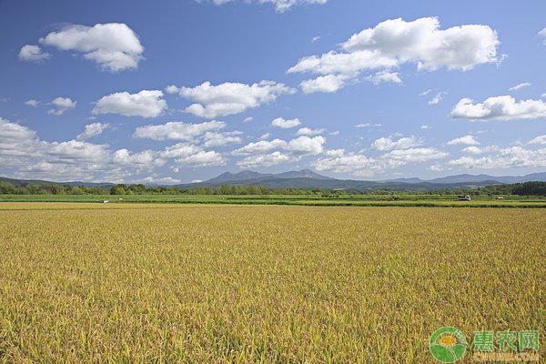 蛙稻共生养殖技术