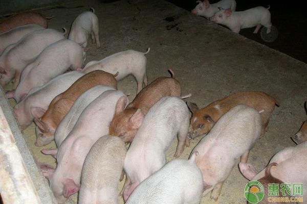 非洲猪瘟传播途径