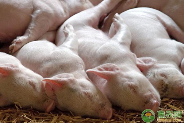 非洲猪瘟防治