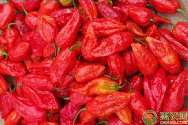 魔鬼辣椒多少钱一斤?有哪些功效和作用?市场前景怎样?